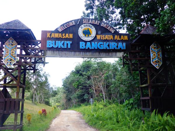bangkirai02