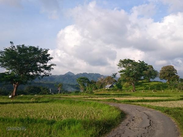 bawean43